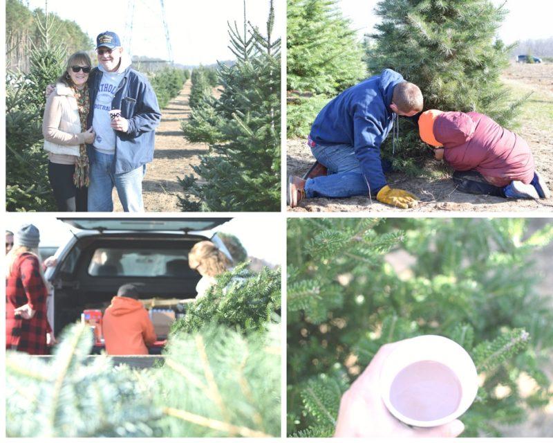 Christmas trees, tree hunting